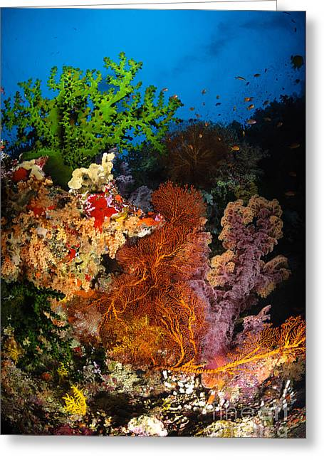 Cnidaria Greeting Cards - Hard Coral And Soft Coral Seascape Greeting Card by Todd Winner