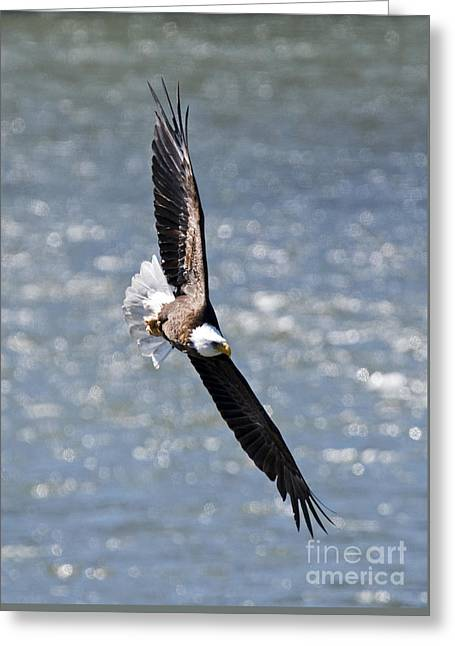 National Symbol Greeting Cards - Hard Left Greeting Card by Mike Dawson