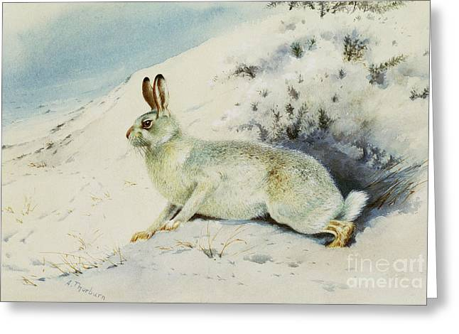 Hare Greeting Card by Archibald Thorburn