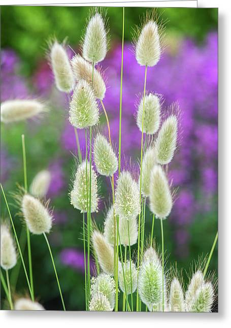 Hare's Tail Grass Greeting Card by Tim Gainey