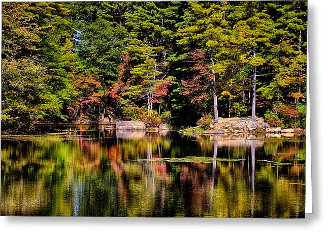 Grey Clouds Greeting Cards - Harold Parker State Forest Greeting Card by Tricia Marchlik
