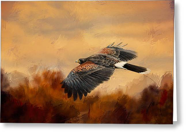 Hawks In Flight Greeting Cards - Harris Hawk In Autumn Greeting Card by Jai Johnson