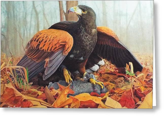 Harris Hawk  Greeting Card by Ken Everett