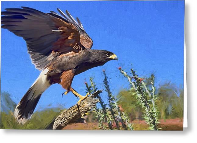 Southwestern Birds Greeting Cards - Harris Hawk Greeting Card by Nikolyn McDonald
