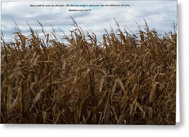 Harvest Greeting Card by Cliff Ball