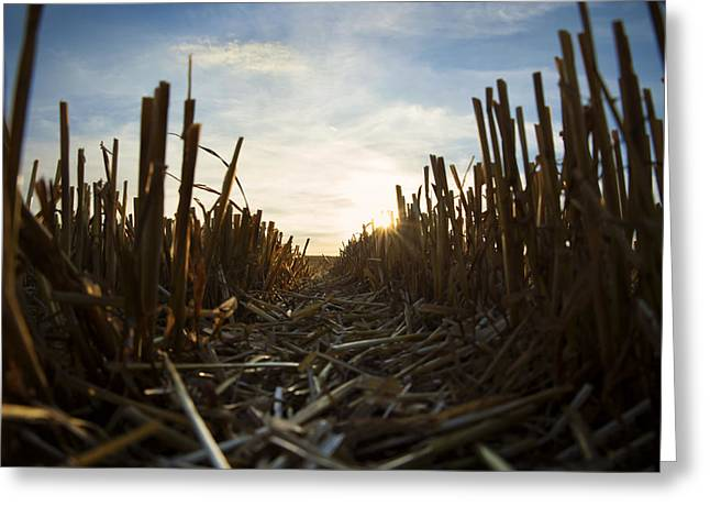 Farmers Field Greeting Cards - Harvest   Greeting Card by Mike Santis