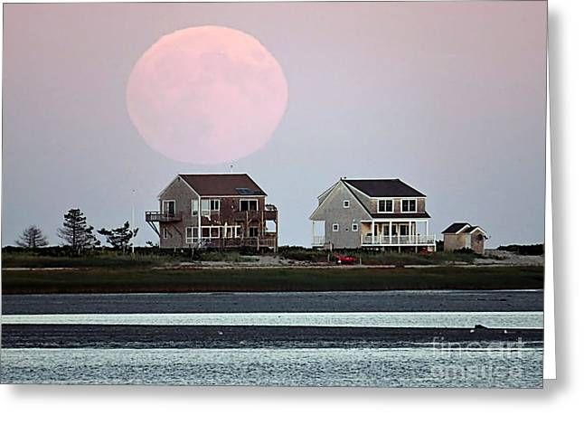 New England Ocean Greeting Cards - Harvest Moon 2015 Sept 27 Greeting Card by Janice Drew