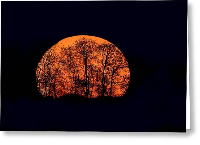 Harvest Moon Greeting Cards - Harvest  Moon Rising Greeting Card by William Jobes