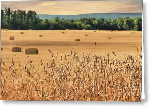 Harvest Of Gold Greeting Card by Lori Deiter