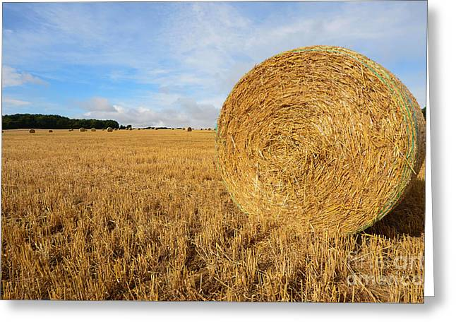 Harvest Greeting Card by Nichola Denny