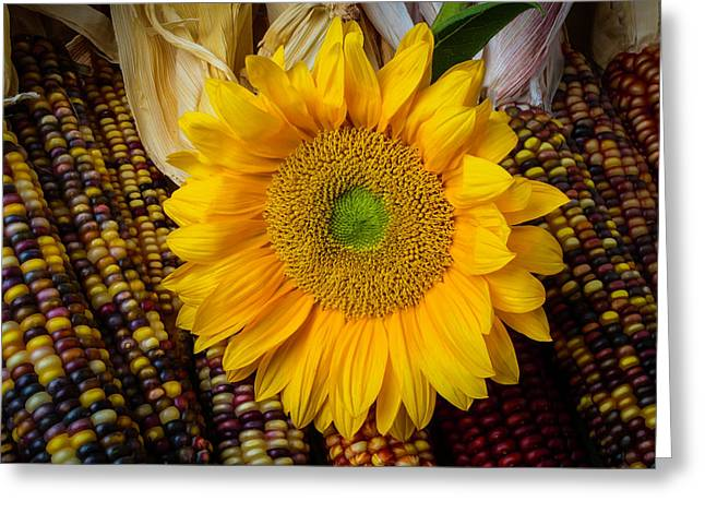 Harvest Sunflower Greeting Card by Garry Gay