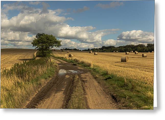 Hay Bales Greeting Cards - Harvest time Greeting Card by Chris Fletcher