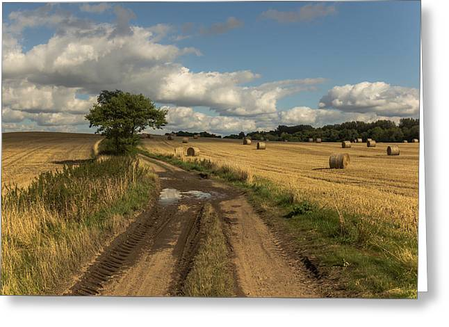 Bale Greeting Cards - Harvest time Greeting Card by Chris Fletcher