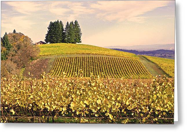 Harvest Time In A Vineyard Greeting Card by Margaret Hood