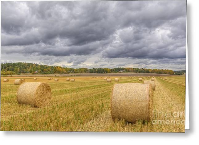 Harvest Time Greeting Card by Veikko Suikkanen
