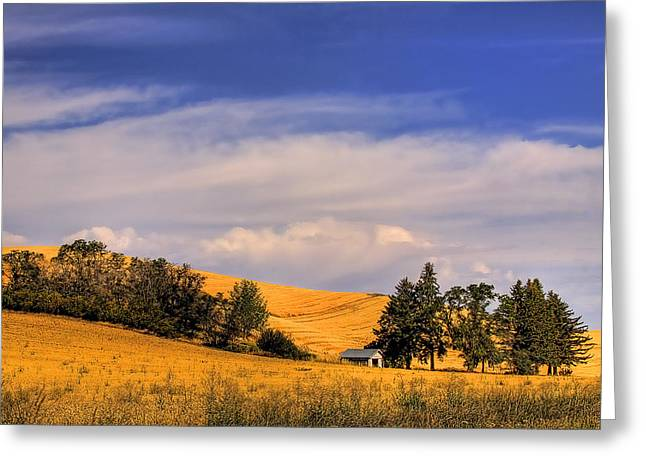 Harvested Greeting Card by David Patterson