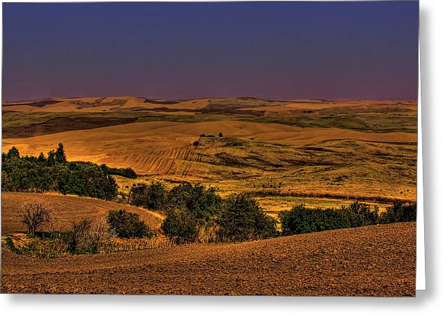 Harvested Fields Greeting Card by David Patterson