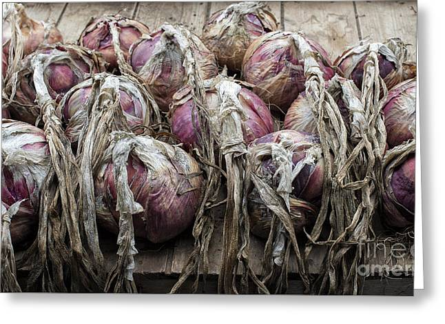 Shed Photographs Greeting Cards - Harvested Onions Red Winter Greeting Card by Tim Gainey