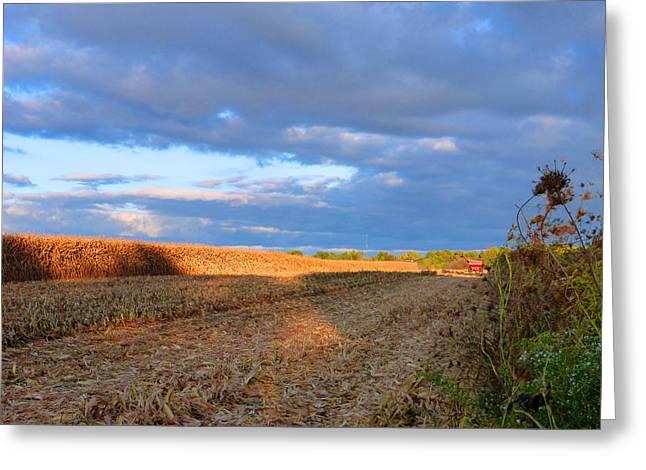 Harvesting Corn Greeting Card by Tina M Wenger