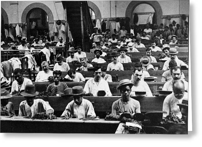 Cigar Factory Greeting Cards - Havana Cuba - Cigars being rolled - c 1903 Greeting Card by International  Images