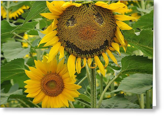 Buttonwood Farm Greeting Cards - Have a Groovy Day said the Hippie Flower Greeting Card by Joanne Brown