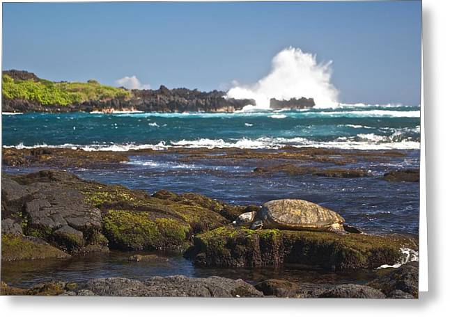 Green Sea Turtle Greeting Cards - Hawaiian Green Sea Turtle  Greeting Card by James Walsh