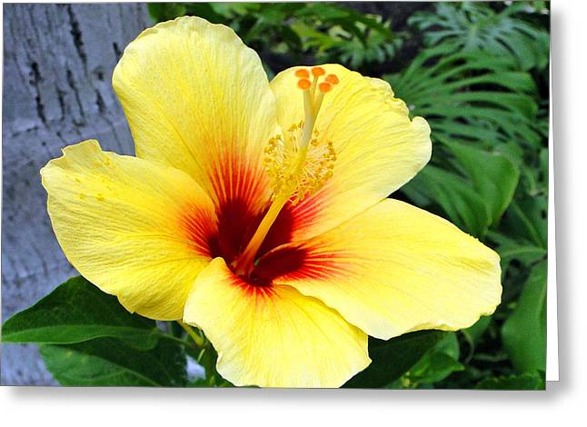 Hawaiin Greeting Cards - Hawaiian Hibiscus Greeting Card by Sue Melvin