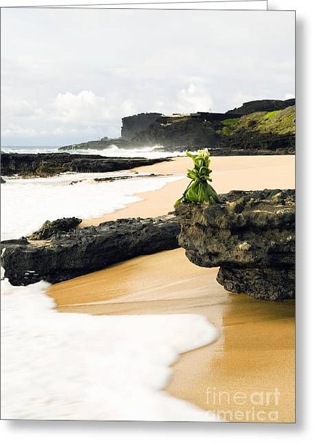 Hawaiian Offering On Beach Greeting Card by Dana Edmunds - Printscapes