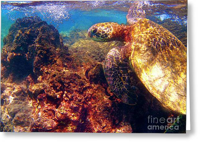 Green Sea Turtle Greeting Cards - Hawaiian Sea Turtle - on the Reef Greeting Card by Bette Phelan