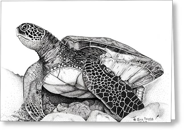 Awsome Greeting Cards - Hawaiian Sea Turtle Greeting Card by Eric Young