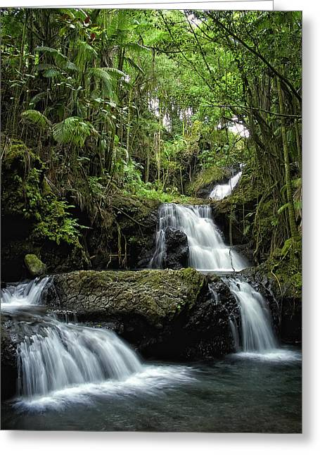 Vine Leaves Photographs Greeting Cards - Hawaiis Onomea Falls - Big Island Greeting Card by Daniel Hagerman