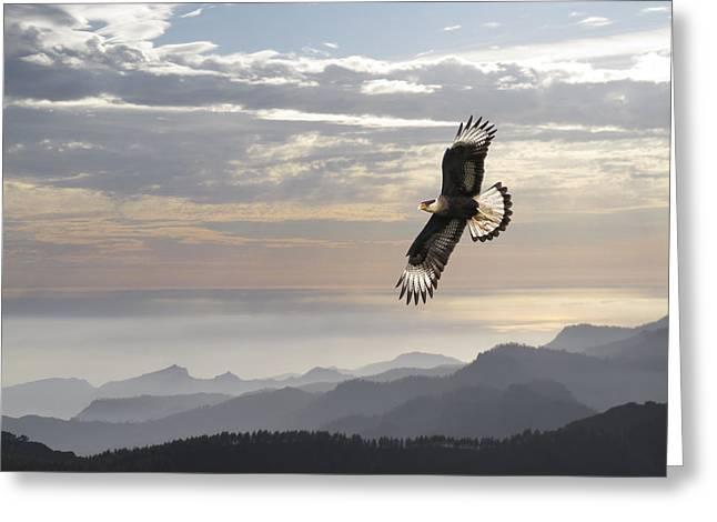 Soaring Falcon Greeting Cards - Hawk Mountains Greeting Card by Daniel Hagerman