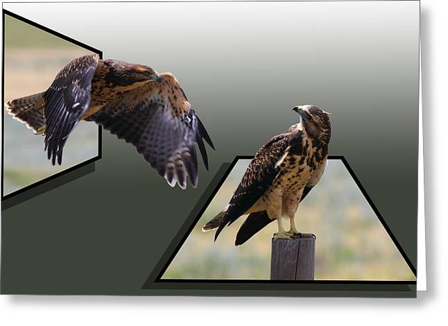 Stood Mixed Media Greeting Cards - Hawks Greeting Card by Shane Bechler