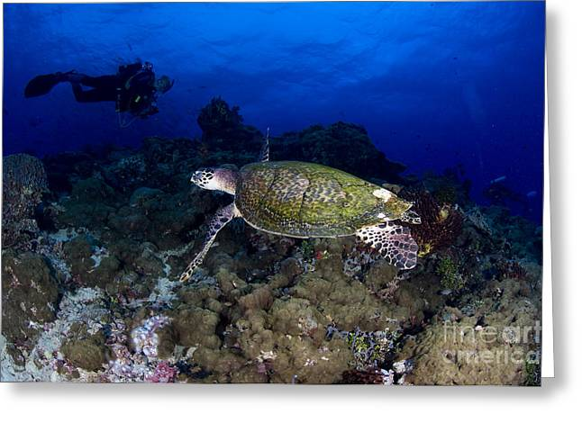 Undersea Photography Photographs Greeting Cards - Hawksbill Turtle Swimming With Diver Greeting Card by Steve Jones