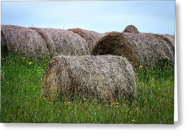 Hay Bales Among The Wildflowrs Greeting Card by Donna Lee