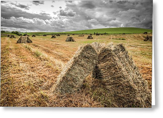 Hay Bales Greeting Cards - Hay Fever Greeting Card by Brad Stinson