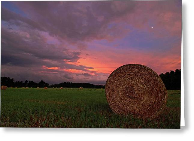 Hay Now Greeting Card by Jerry LoFaro