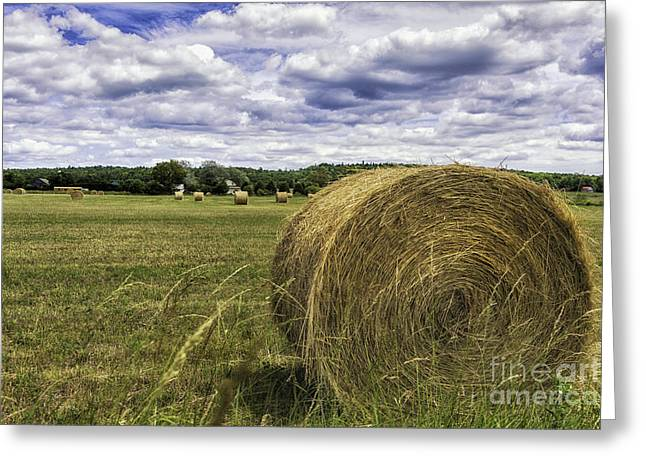 Hay Bales Greeting Cards - Hay Roll Greeting Card by Timothy Hacker