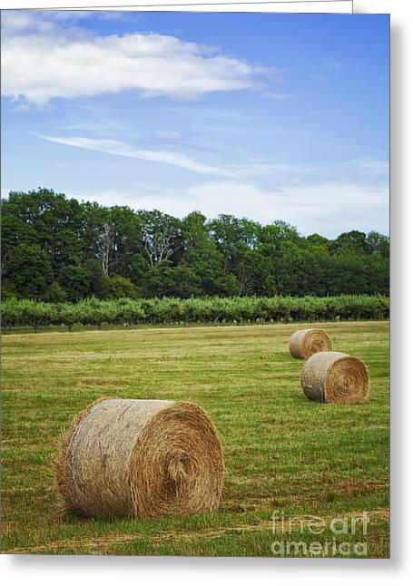Haybales Greeting Cards - Haybales in a field Greeting Card by Sophie McAulay