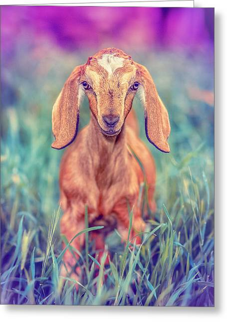 Goat Photographs Greeting Cards - Hazel Greeting Card by TC Morgan
