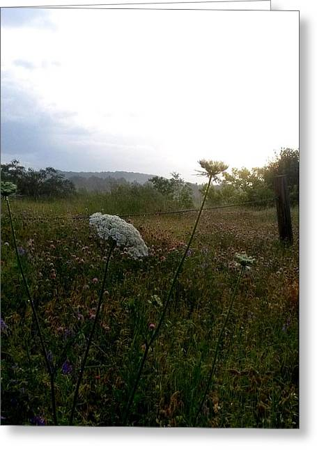Overcast Day Greeting Cards - Hazy Day of Wildflowers Greeting Card by Maria Urso