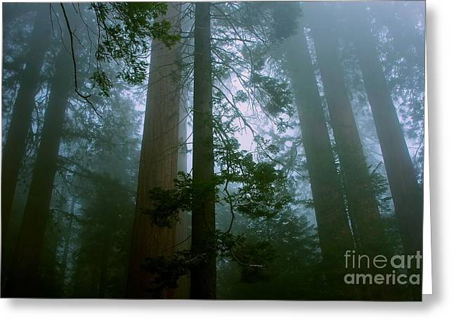 Big Tree Greeting Cards - Hazy Sequoia Forest - green Greeting Card by Hideaki Sakurai