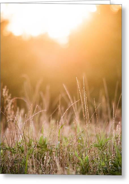 Harvest Art Greeting Cards - Hazy Sunset Greeting Card by Shelby  Young