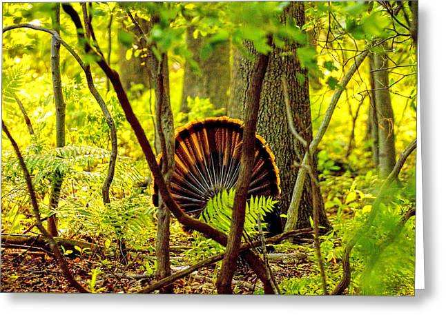 Barn Yard Greeting Cards - HDR turkey in woods Greeting Card by Geraldine Scull