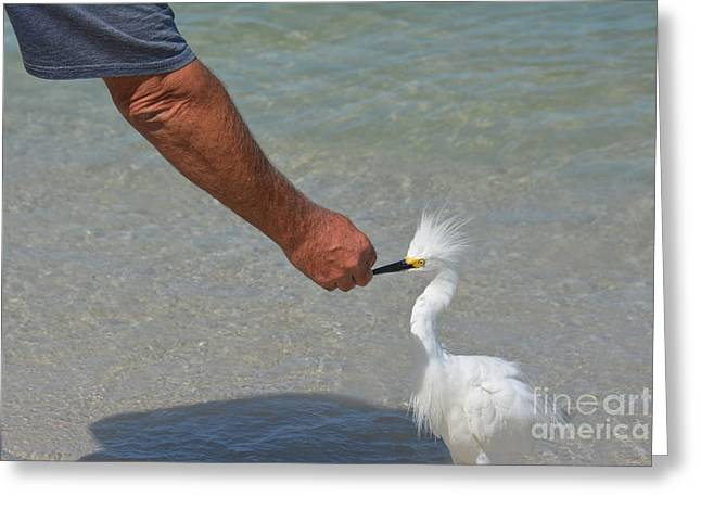 Hand Fed Greeting Cards - He gave me a Fish Greeting Card by Don Columbus