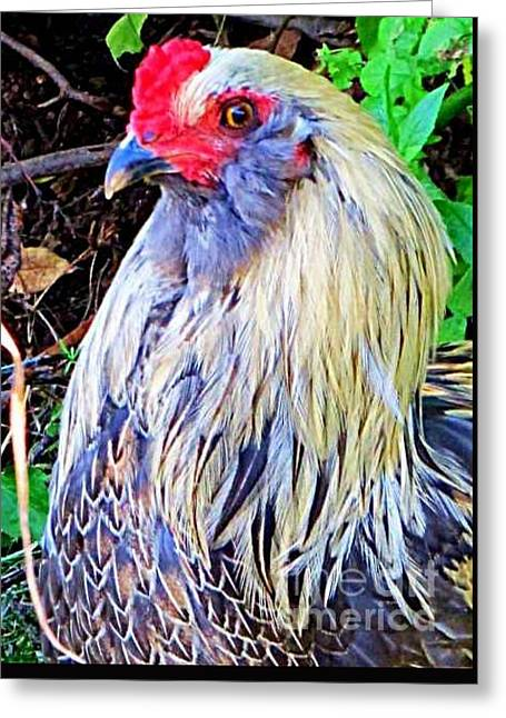 Barn Yard Greeting Cards - He knows hes special Greeting Card by Georgia Brushhandle