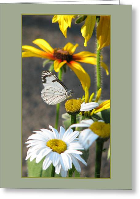 Nature Greeting Cards - He Loves Me He Loves Me Not Greeting Card by Brooks Garten Hauschild