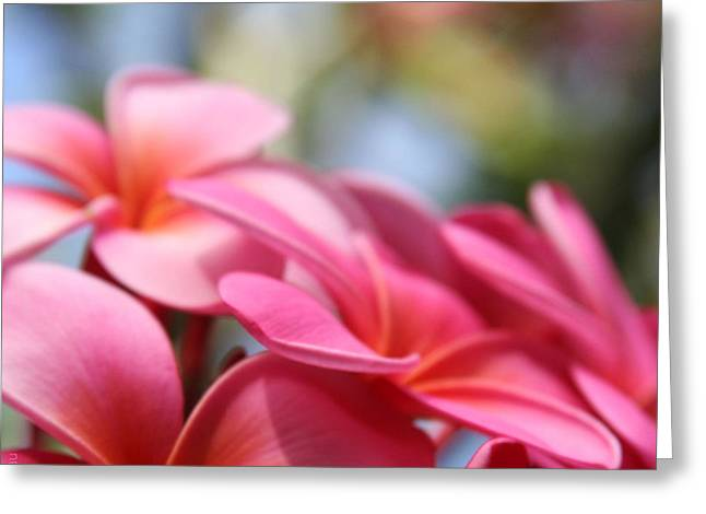 Pink Blossoms Digital Greeting Cards - He Pua Lahaole Ulu Wehi Aloha Greeting Card by Sharon Mau