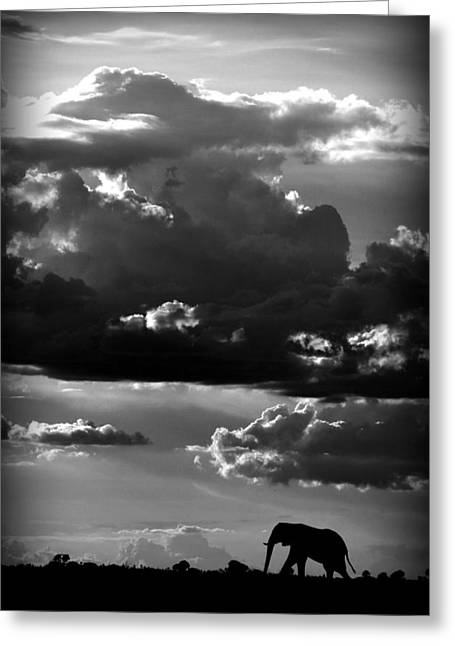 Elephant Greeting Cards - He Walks Under An African Sky Greeting Card by Wildphotoart