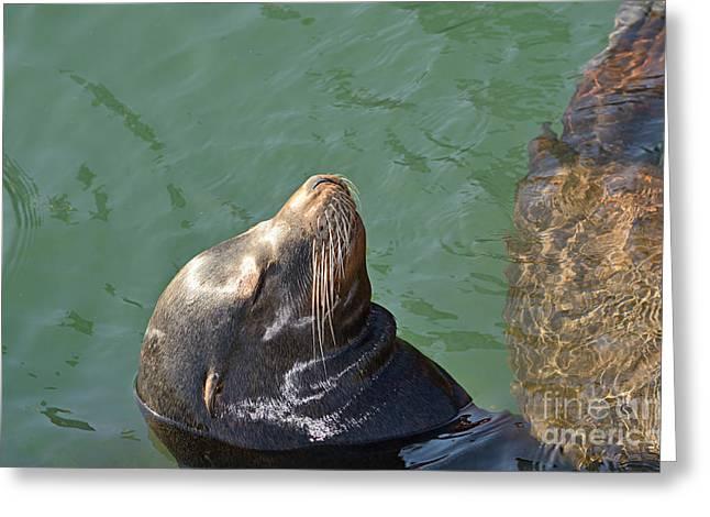 Head Above Water Greeting Card by Marv Vandehey